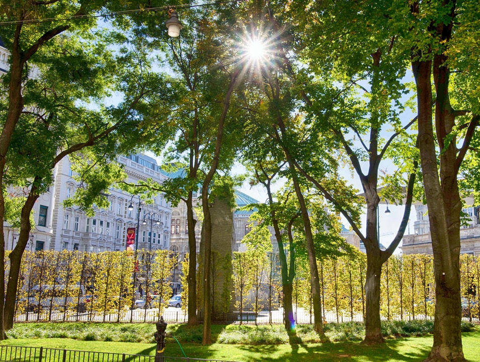 Sunlight through trees by the Albertina