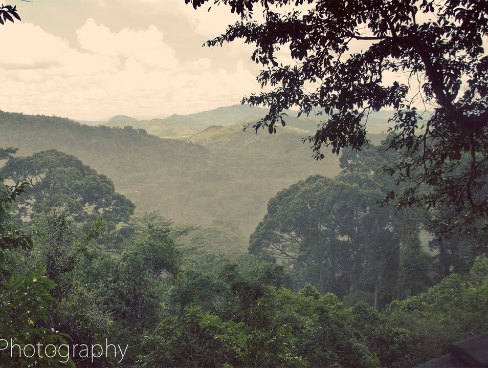 Rainforest Canopy Walk with a View