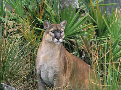 Big Cat Rescue Tampa Florida United States
