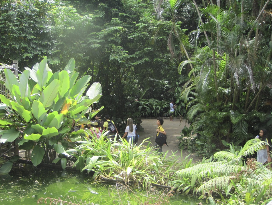 Learn About Amazon Rainforest