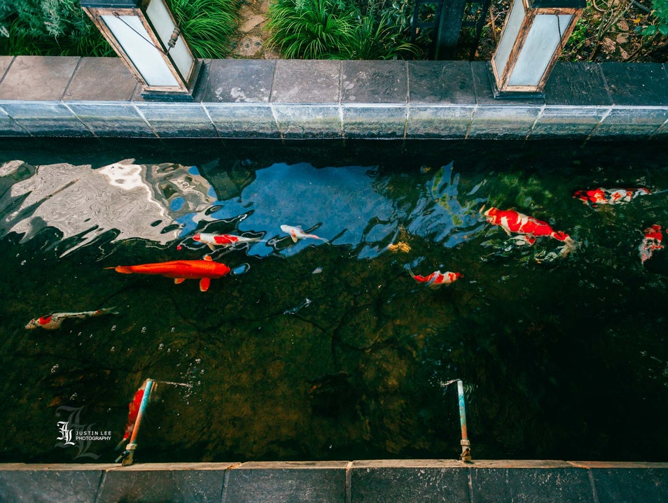 Let Calming Waters & Koi Relieve Your Stress