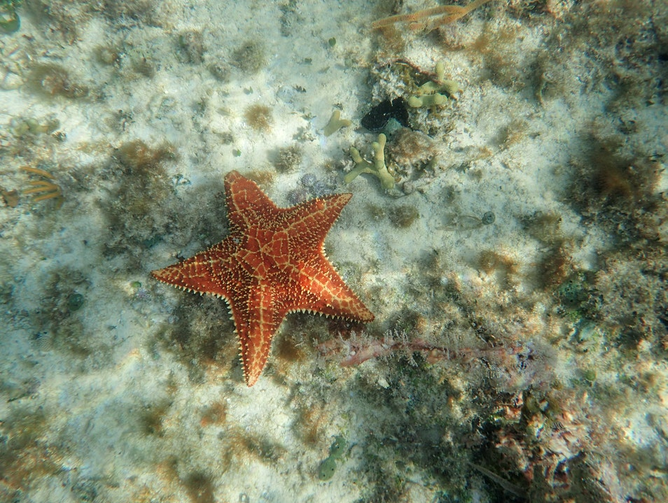 Dive Into Adventure at Waterlemon Cay Central  United States Virgin Islands