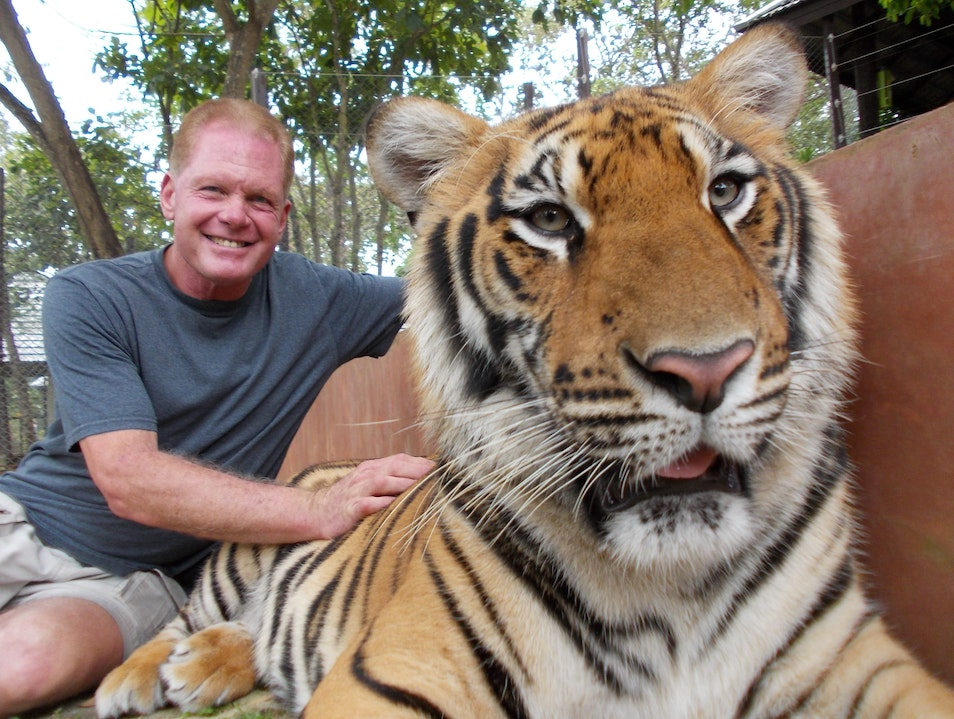 Spending Quality Time With Bengal Tigers Samoeng  Thailand