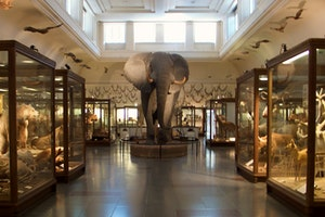 Gothenburg Museum of Natural History