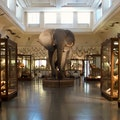 Gothenburg Museum of Natural History Gothenburg  Sweden