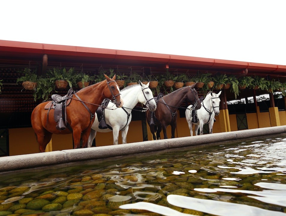 Ride Horses in an Untouched Part of Costa Rica at AltaGracia