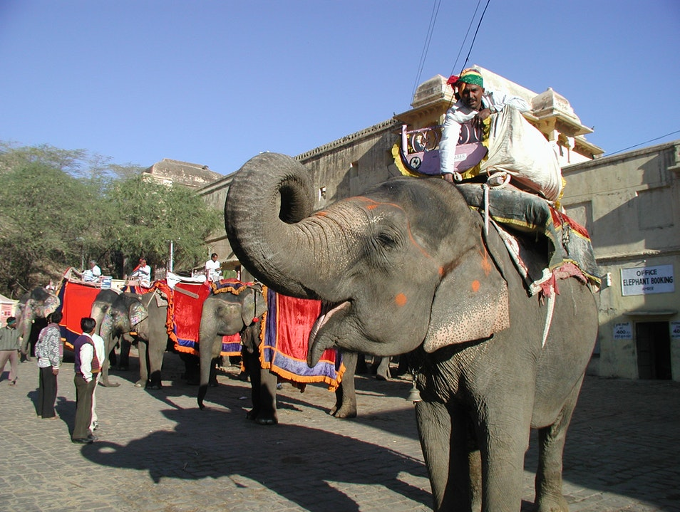 Elephant Ride to Amber Fort, Jaipur India Amer  India