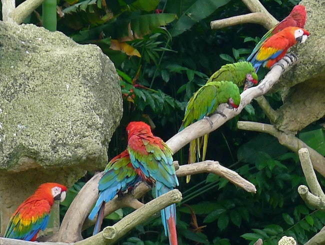 Asia's Best Zoo and Birds of (a Tropical) Paradise