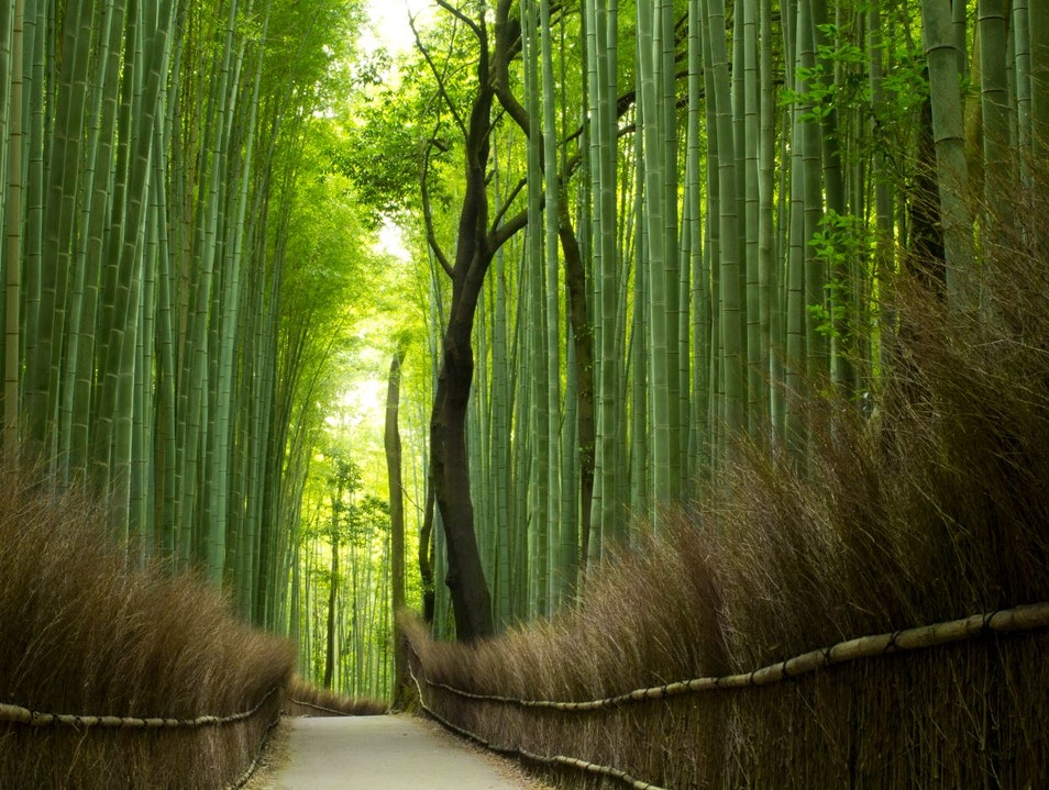 Arashiyama Bamboo Groves Kyoto  Japan