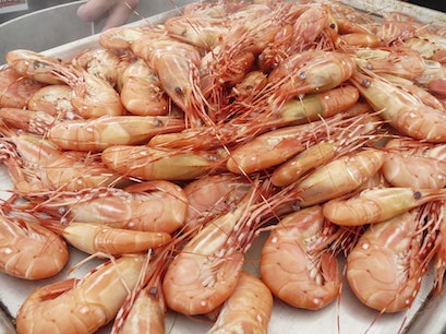 Spot Prawns Fresh Off the Boat Vancouver  Canada