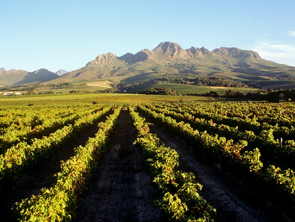 Winelands Stellenbosch  South Africa
