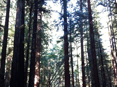 Armstrong Redwoods State Natural Reserve Guerneville California United States