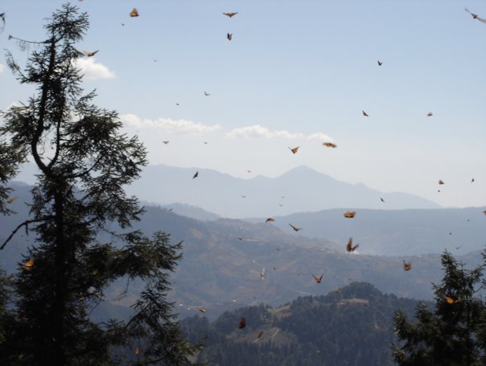 In Search of the Monarch Butterflies