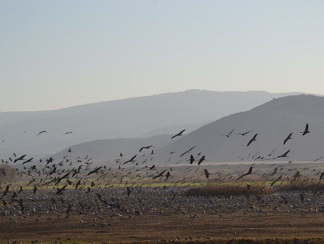 Bird-watching in the Hula Valley