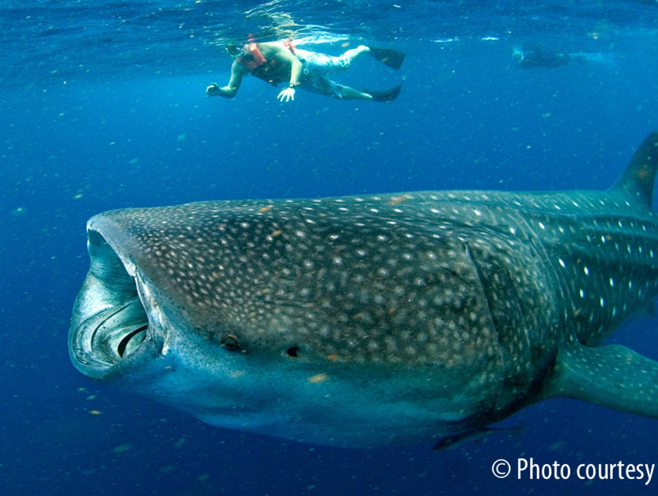 Swimming with Whale Sharks... Scary or Not? Cancun  Mexico