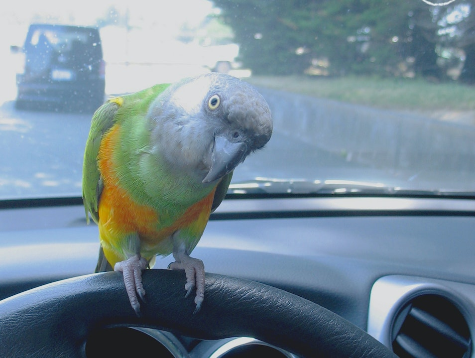road-trip with parrot