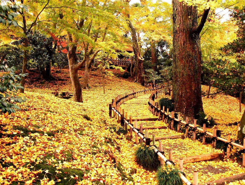 A Golden fall evening, a garden at dusk Kanazawa  Japan
