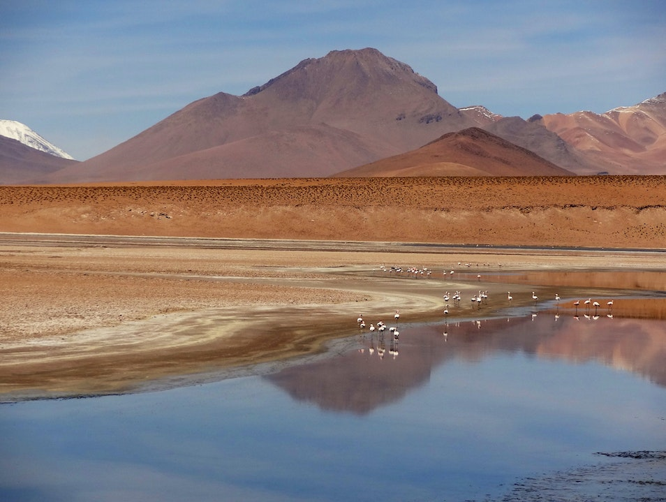 Flamingos wade in lakes of the Bolivian altiplano Cochabamba  Bolivia