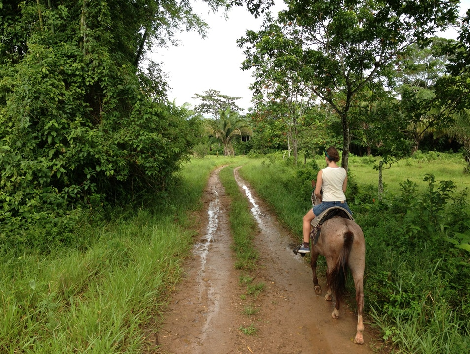 Rain forest Trekking on Horseback