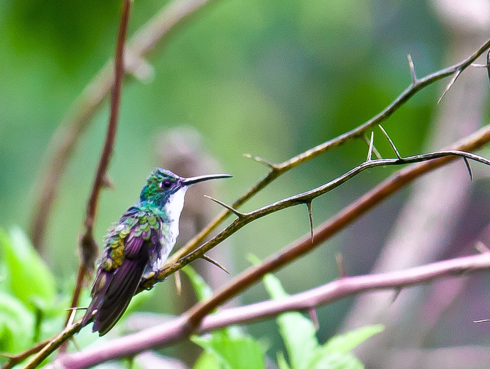 Hummingbird on a branch Tunapuna Piarco  Trinidad and Tobago