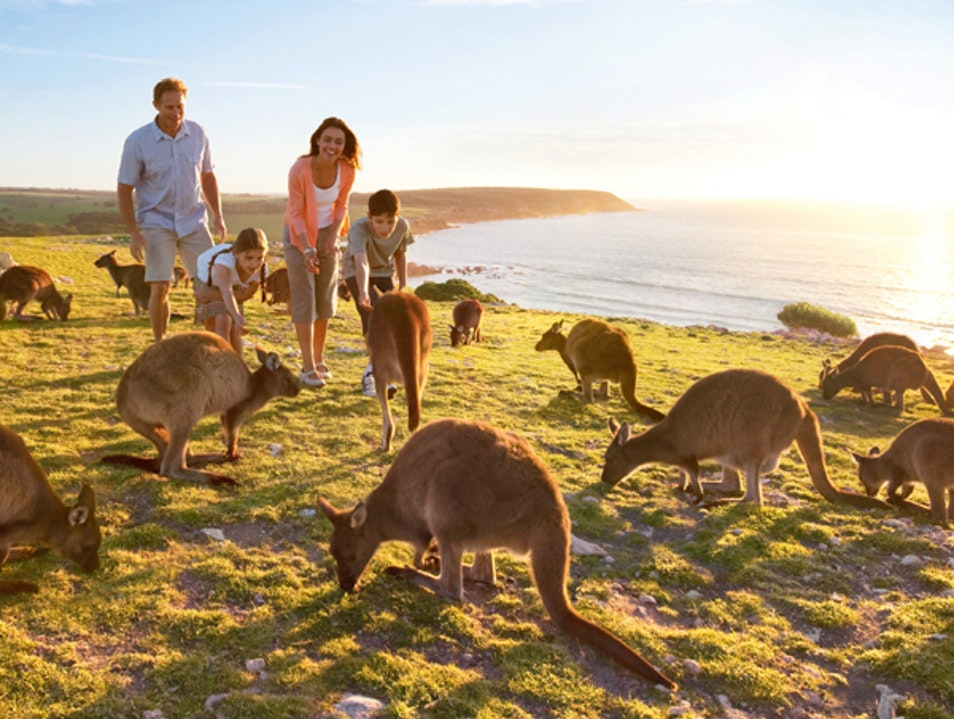 Your Gateway to Kangaroo Island Adelaide  Australia