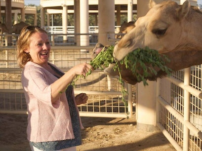 Royal Camel Farm Budaiya  Bahrain