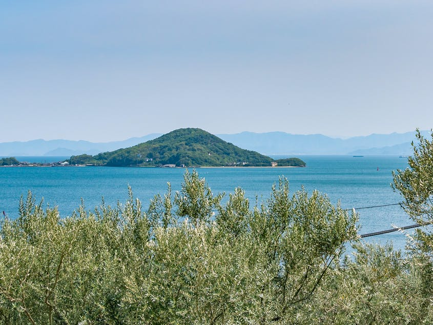 Silvery-green olive trees help define Shodoshima's island landscapes.