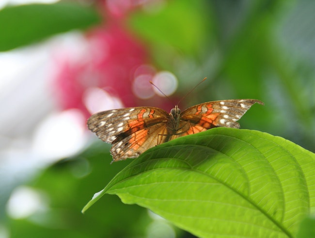 Butterflies and Insects Galore