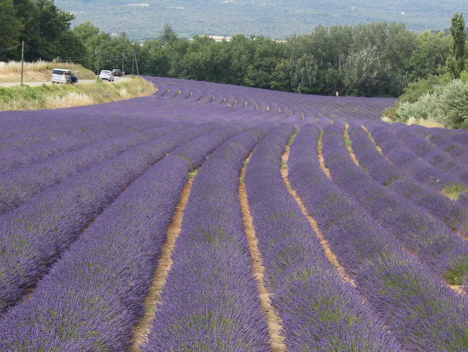 Purple Purple Purple Roussillon  France