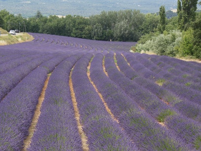 Lavender Fields Roussillon  France