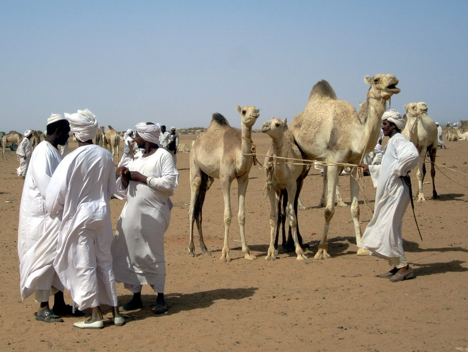 All the King's Camels