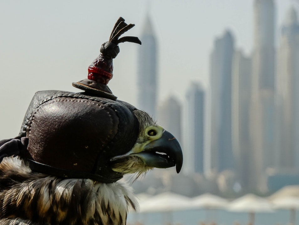 Falconry on the Beach Dubai  United Arab Emirates