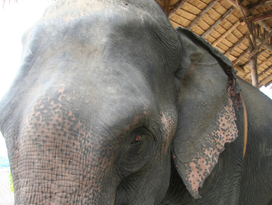 Ride an Elephant Through the Hills of Chiang Mai