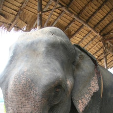 Ran-Tong Elephant Rescue and Care Camp