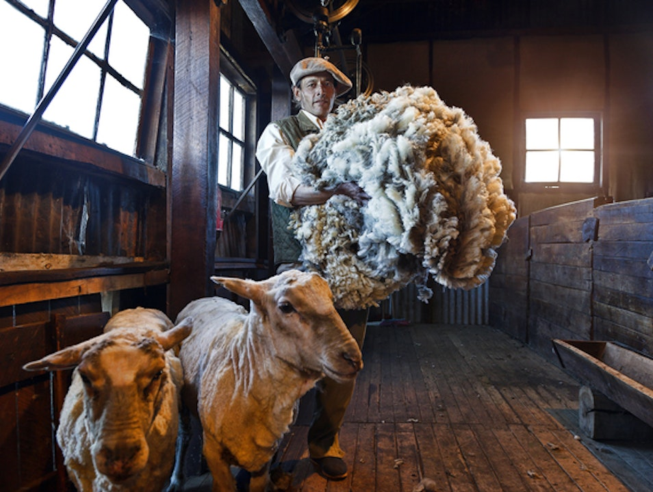 TOUCH: SHEEP SHEARING AT A PATAGONIAN ESTANCIA Torres del Paine  Chile