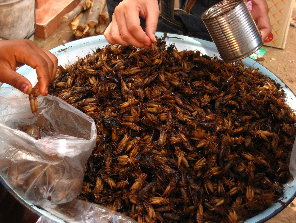 Crunch Time: Why I ate a cricket in Cambodia Siem Reap  Cambodia