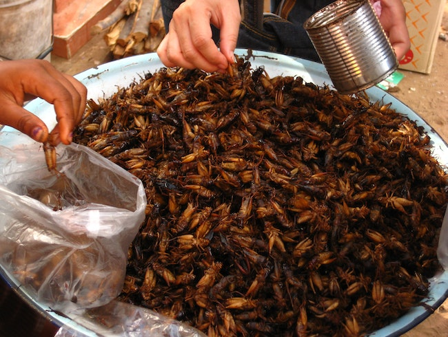 Crunch Time: Why I ate a cricket in Cambodia