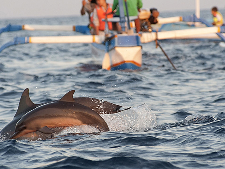 Breakfast for Dolphins Banjar  Indonesia