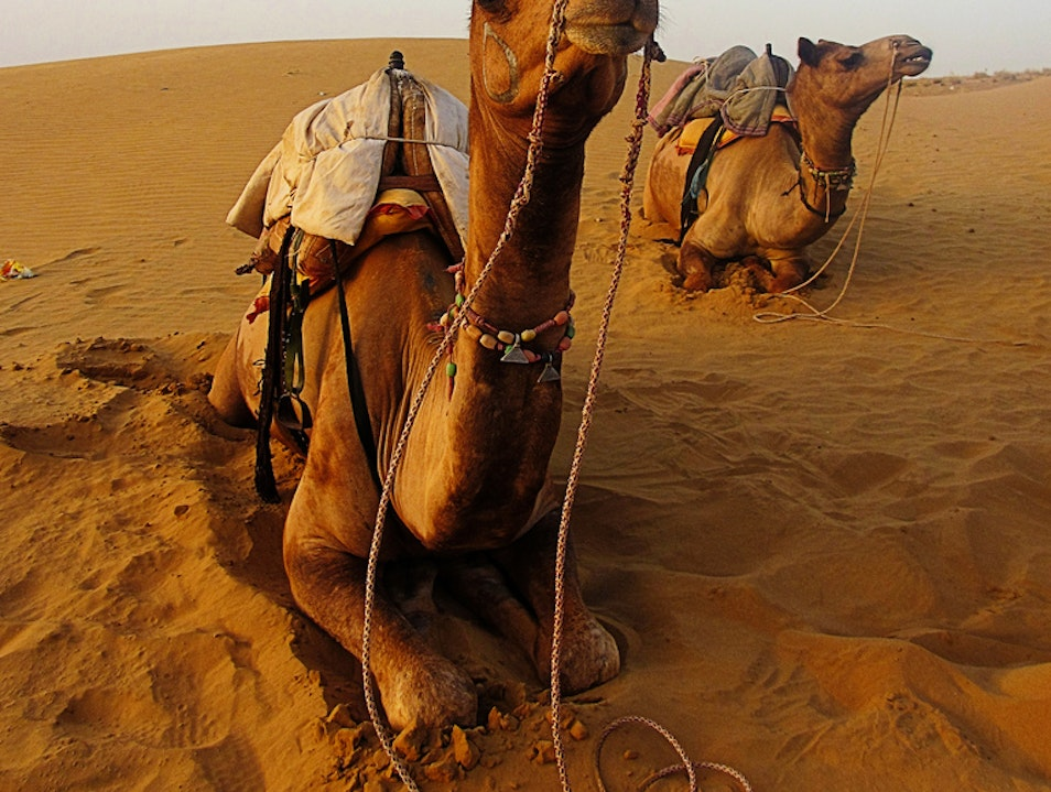 Ride Camels on Dunes just outside of Pakistan