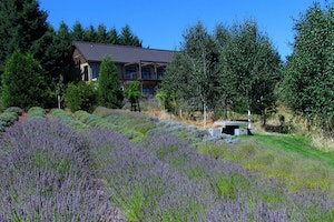 What to Do in the Willamette Valley, Oregon