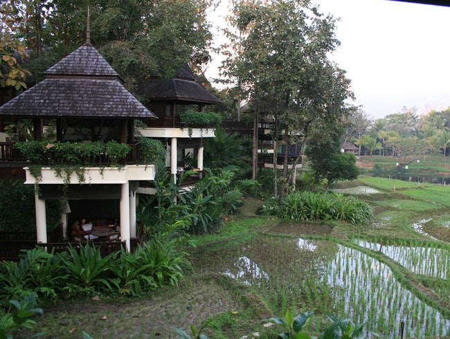 Paradise in the Rice Paddies