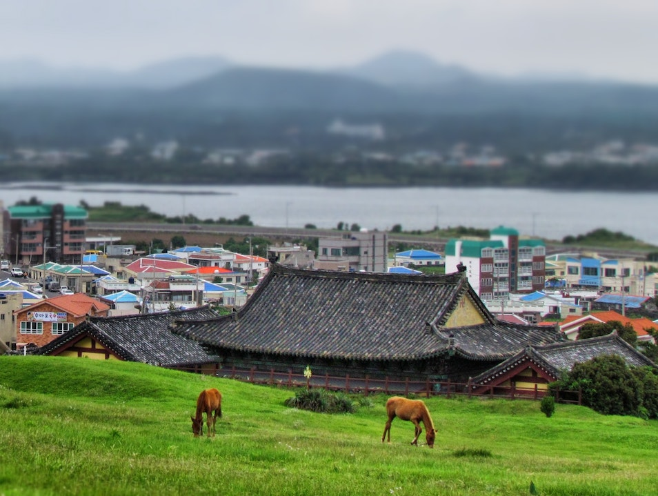 horses and volcanic peaks in the East China Sea Seogwipo  South Korea