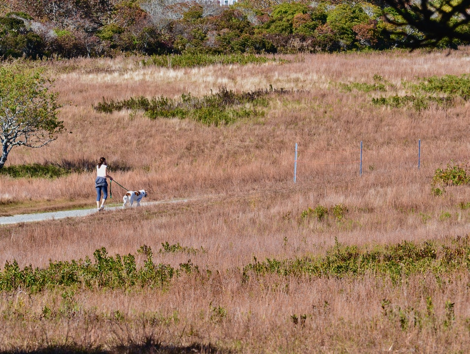 Hike through a Conservation Area Nantucket Massachusetts United States