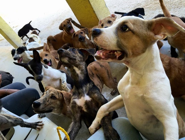 Potcake Play Date: Volunteer and Chill with Awesome Island Dogs