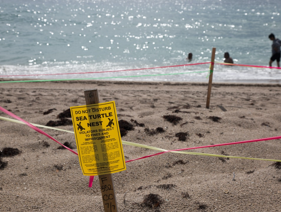 See and Save the Sea Turtles' Nests  Fort Lauderdale Florida United States