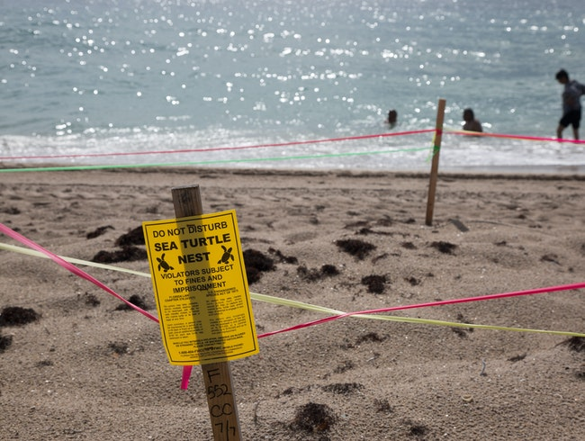 See and Save the Sea Turtles' Nests