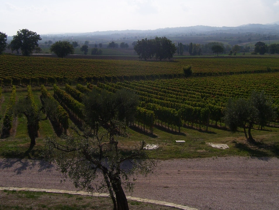 Taste local wines and explore the grounds at Azienda Agraria Perticaia Casale  Italy