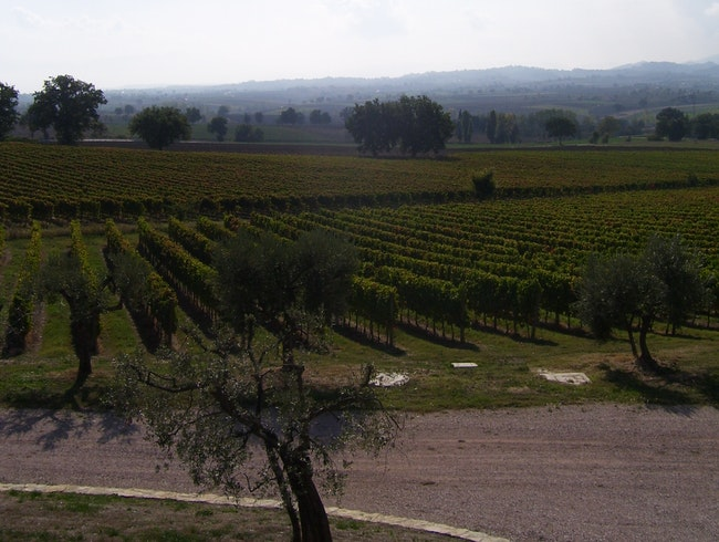 Taste local wines and explore the grounds at Azienda Agraria Perticaia