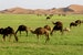 Tours in morocco, Marrakech sahara desert tour, 3 days Fes  Morocco