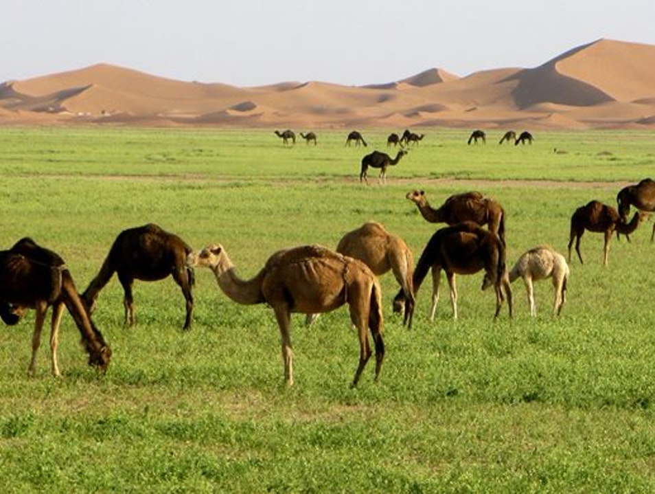 Tours in morocco, Marrakech sahara desert tour, 3 days